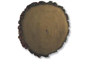 treeround
